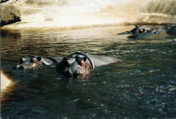 HipposEmmen